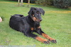 beauceron.net.de